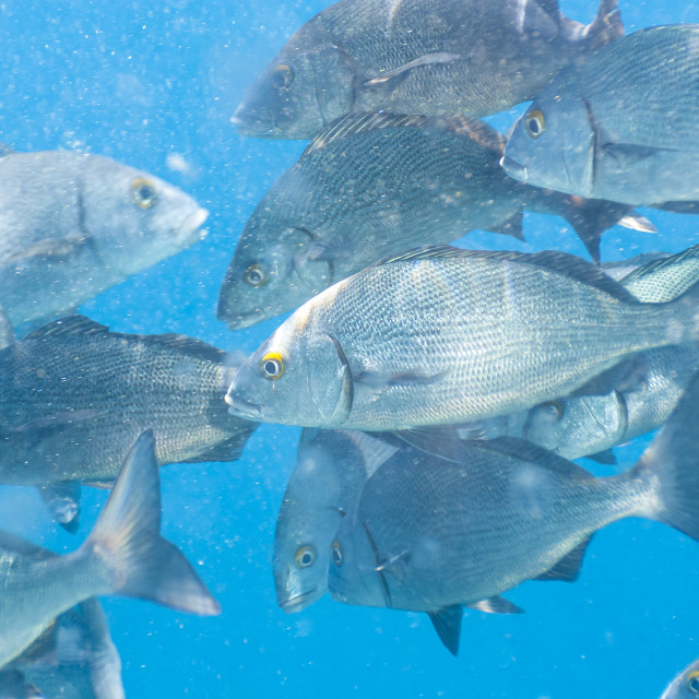 """""""1241 - Galápagos: a not so peaceful sea life in the pacific"""" stock image"""