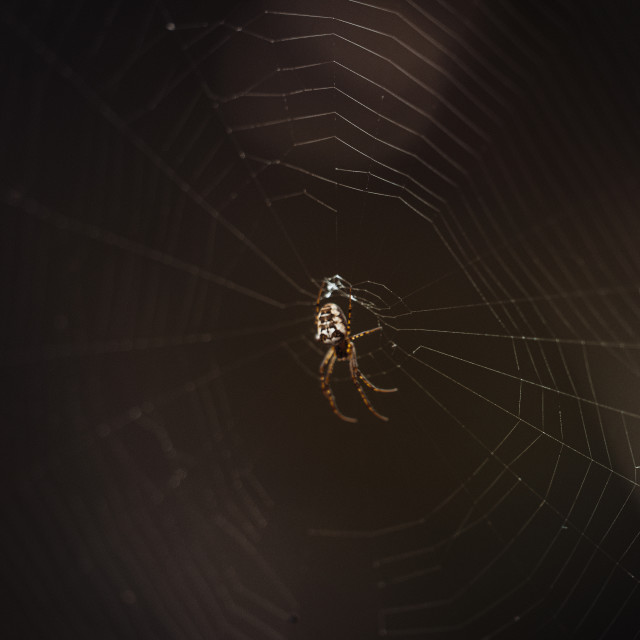 """""""A spider on its web"""" stock image"""