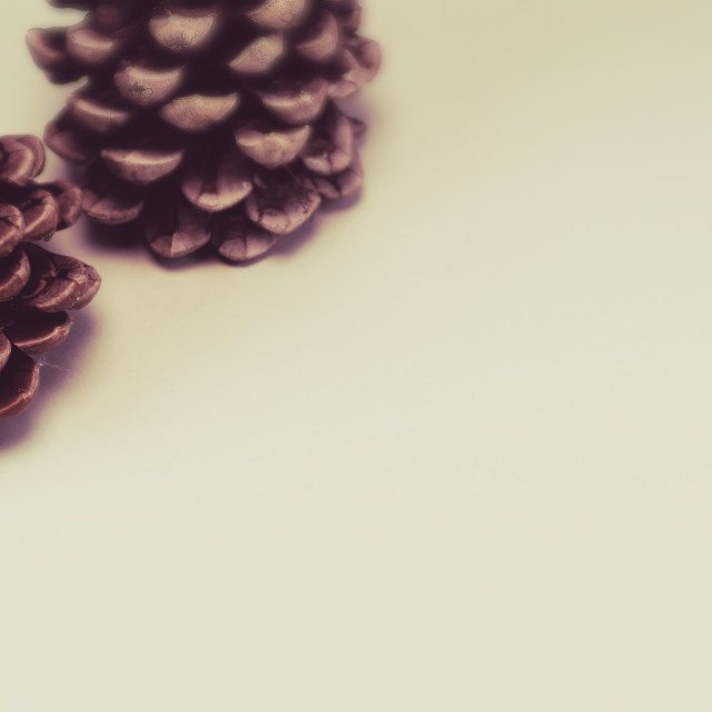 """coniferous cone - plant parts close up"" stock image"