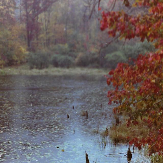 """Autumn on the Pond"" stock image"