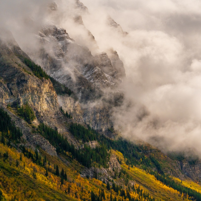"""""""Larches on Fire"""" stock image"""