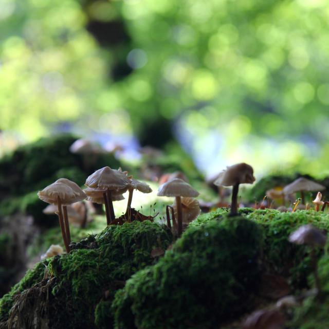 """Forest floor fungi"" stock image"