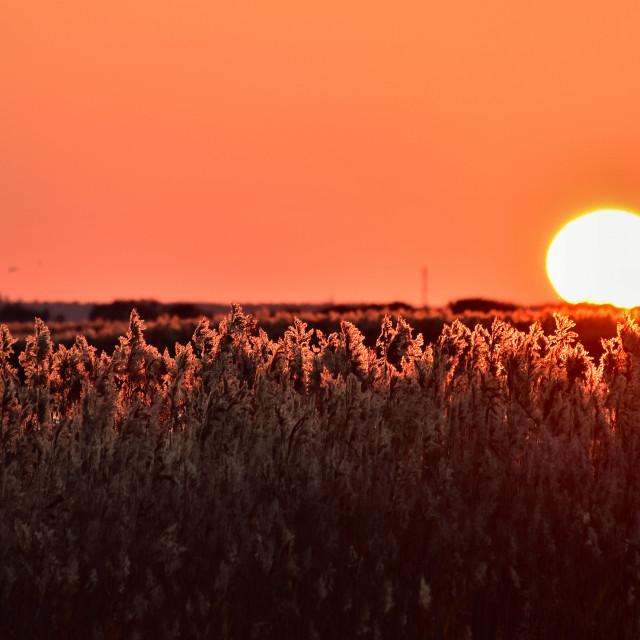 """Warm sunset moment"" stock image"