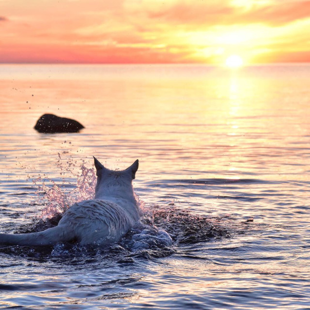 """Chasing sunset"" stock image"