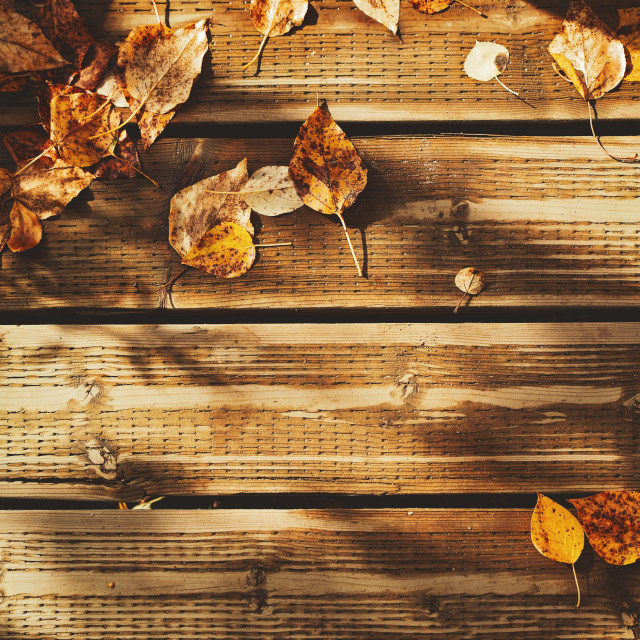 """""""Autumn leaves laying on a row of weathered wood boards"""" stock image"""