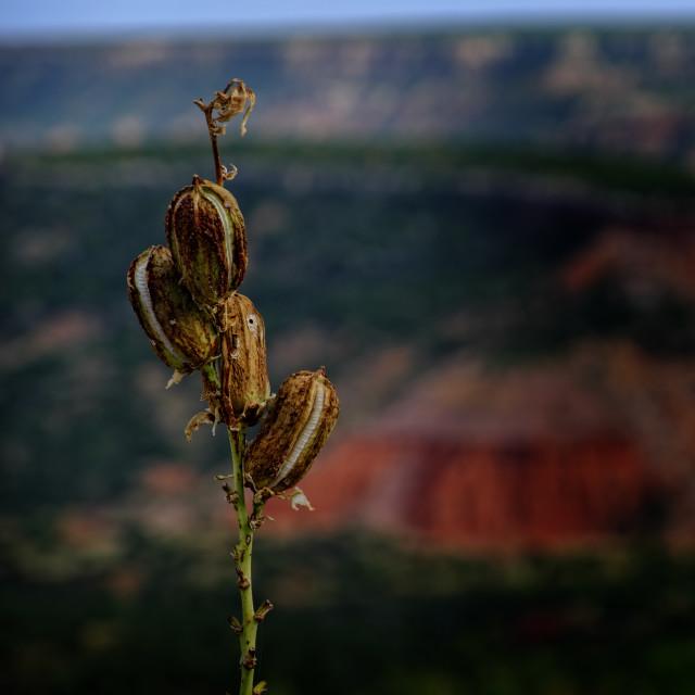 """""""Desert Flora"""" stock image"""