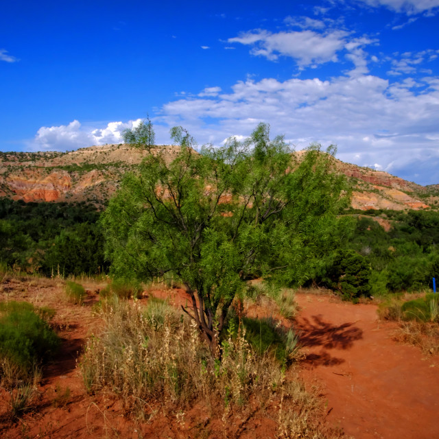"""Palo Duro Canyon Floor"" stock image"