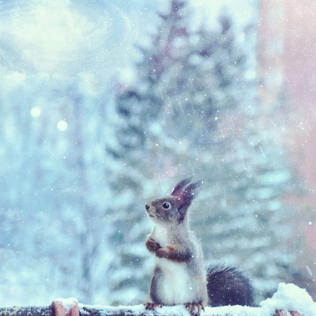 """""""First snow"""" stock image"""