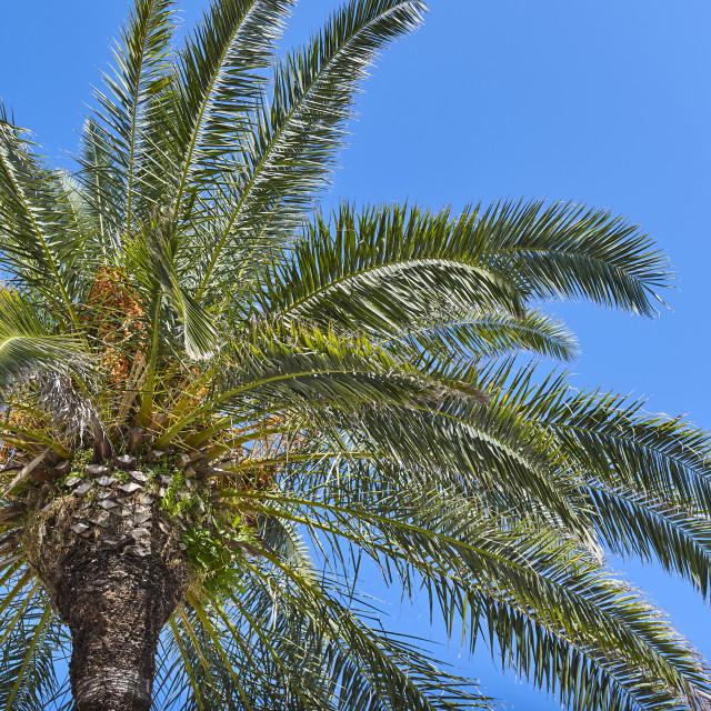 """""""Palmtree"""" stock image"""