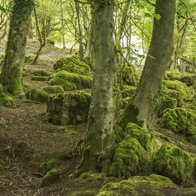 """Woodlands Walk View"" stock image"