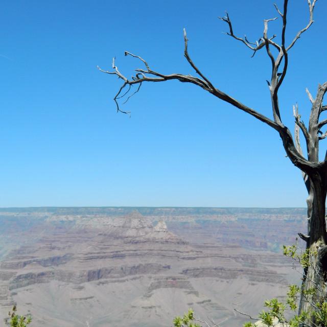 """Grand Canyon View"" stock image"