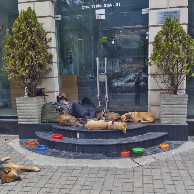 """""""Homeless dog man asleep on the steps, Bogota"""" stock image"""