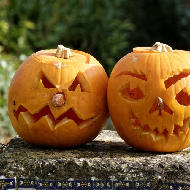 """""""Halloween Pumpkins on a garden wall"""" stock image"""