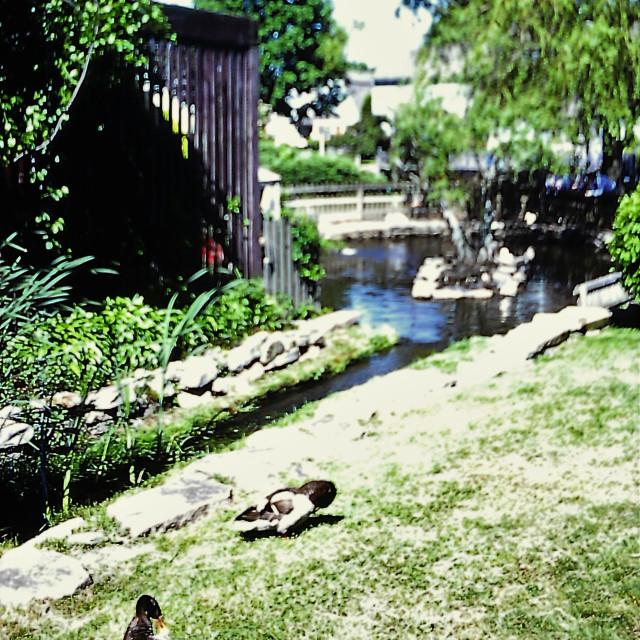 """Duck Pond"" stock image"