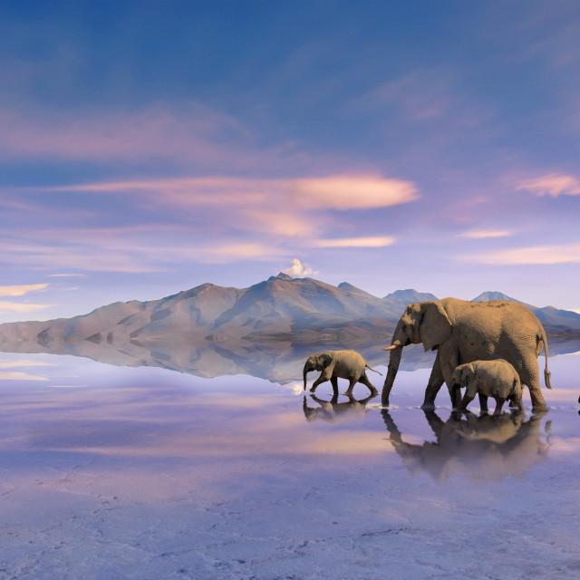 """elefants reflecting"" stock image"
