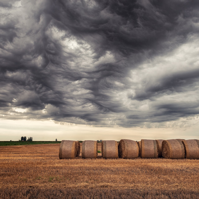 """Bales of hay"" stock image"