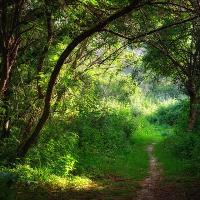 """""""Path on the Loire river bank"""" stock image"""
