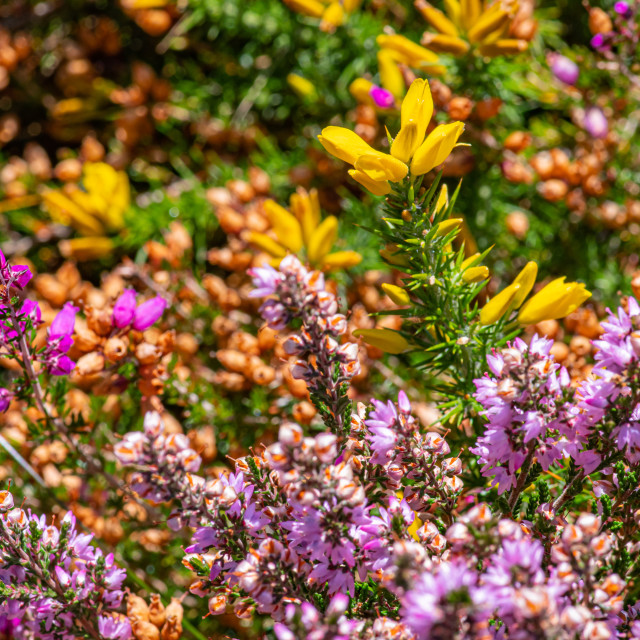 """Textures of the early Autumn heath ii"" stock image"