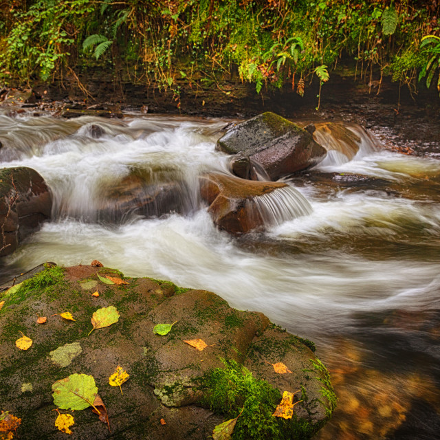 """Autumn at Melincourt Brook"" stock image"