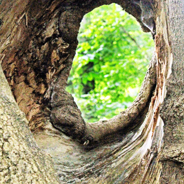 """""""hole in tree"""" stock image"""