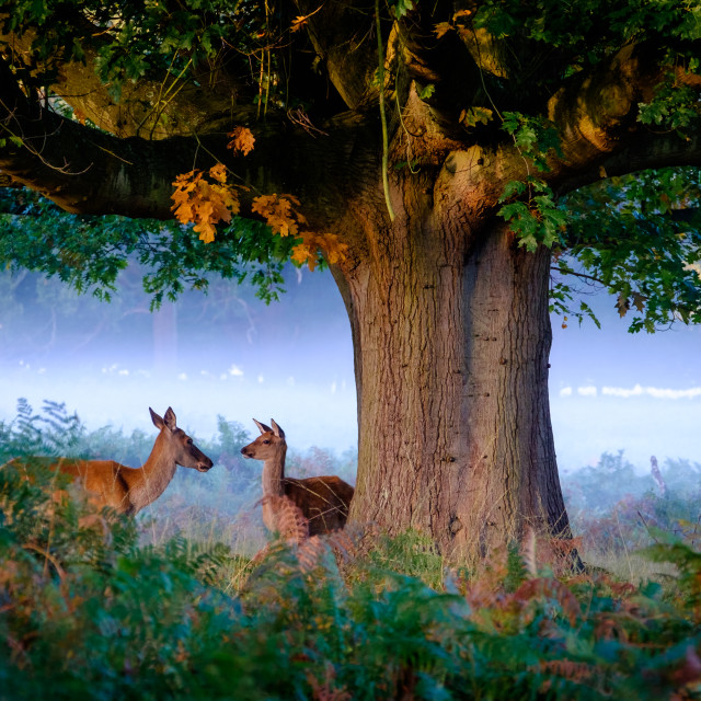 """Autumn in Richmond Park"" stock image"