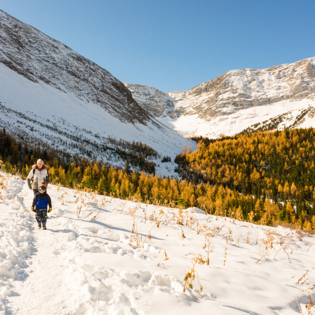 """Larch hike"" stock image"