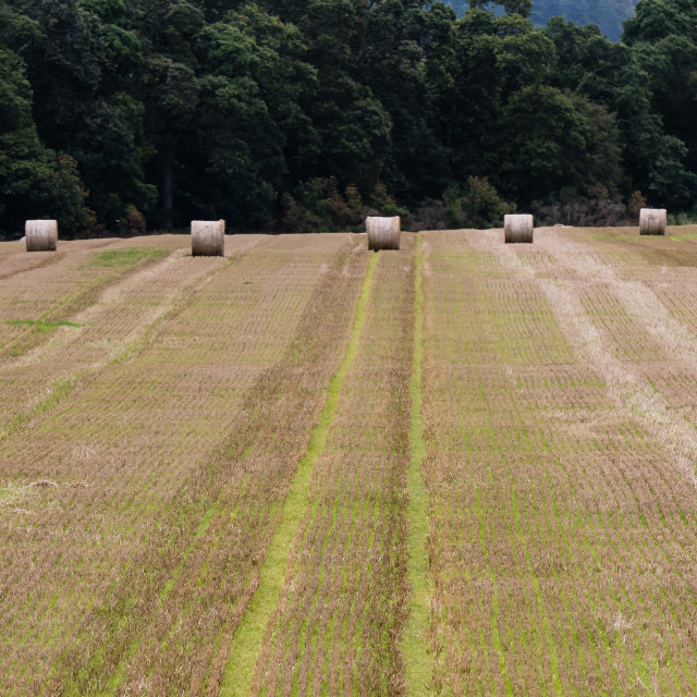 """""""Straw Bales in a Field"""" stock image"""