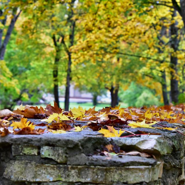 """Ancient autumn"" stock image"