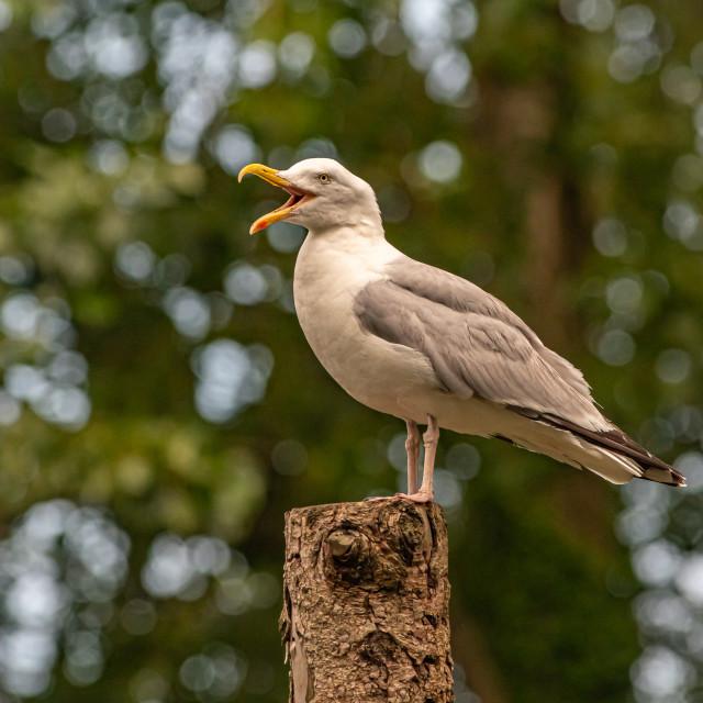 """Seagull cove"" stock image"