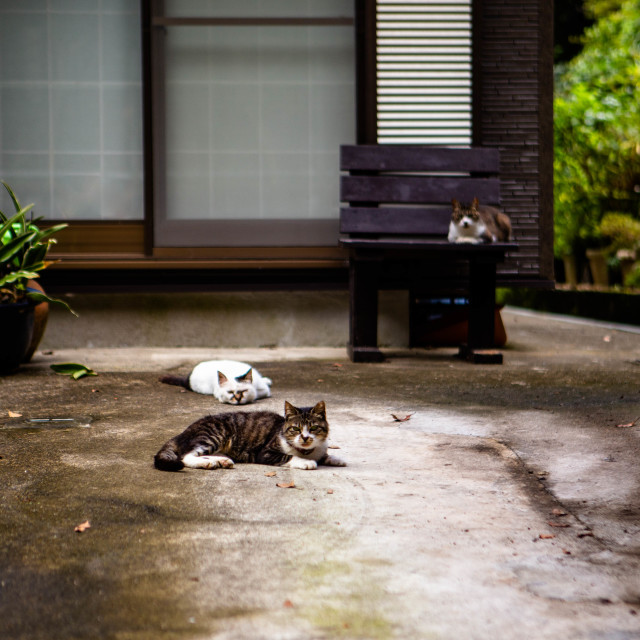 """Cats Beside a Building in Kamakura Japan"" stock image"