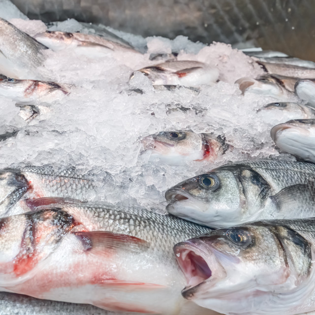 """Fresh sea bass, Dicentrarchus labrax, on display on a market sta"" stock image"