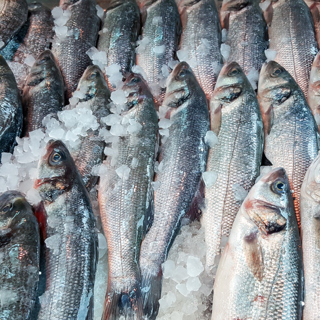 """Assortment of fish on display"" stock image"