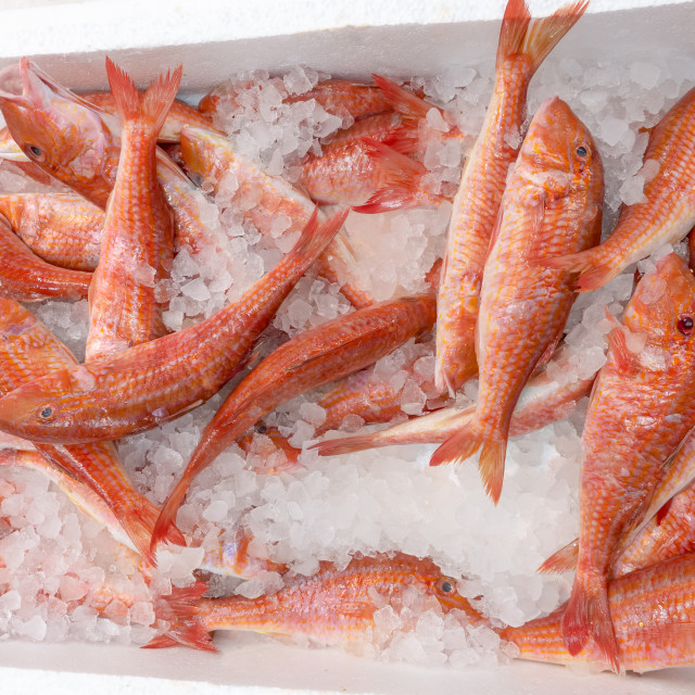 """Fresh red mullet for sale on a fishmonger market stall"" stock image"