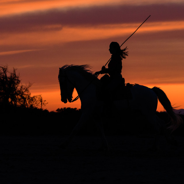 """""""Female horse rider and horse at sunset"""" stock image"""