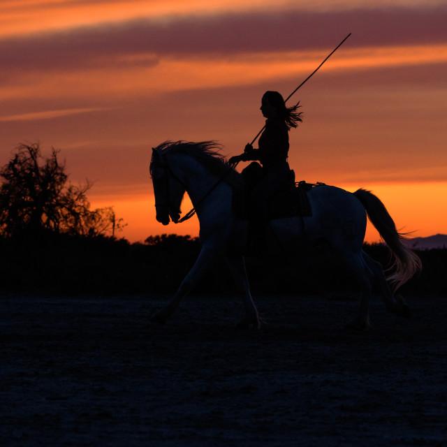 """Female horse rider and Camargue horse at sunset"" stock image"