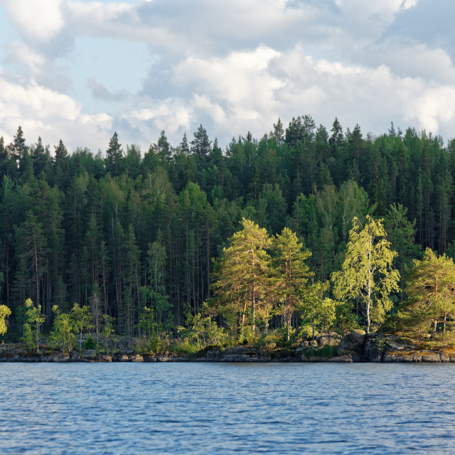 """Sunlit Pine Tree Island"" stock image"