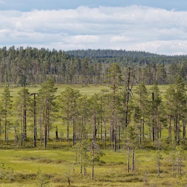 """Woodland Teretti Nature Reserve"" stock image"