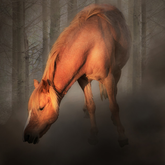 """Horse in the mist"" stock image"