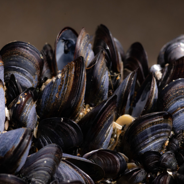 """""""Live mussels in the wild, Cornwall"""" stock image"""