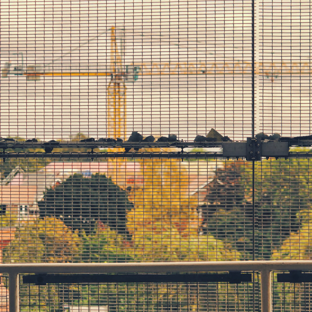 """Crane Through Mesh"" stock image"