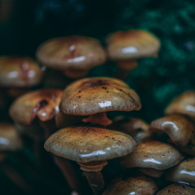 """Fungi up close"" stock image"