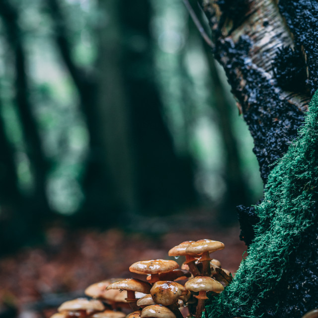 """Damp Fungi"" stock image"