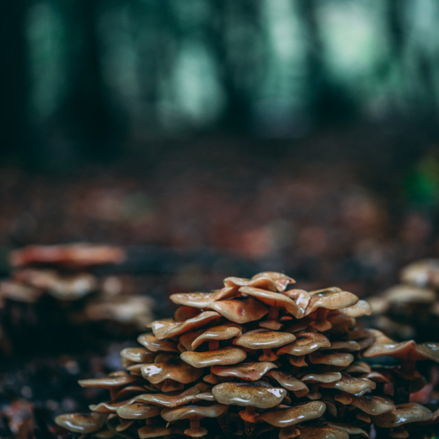 """Fungi forest"" stock image"