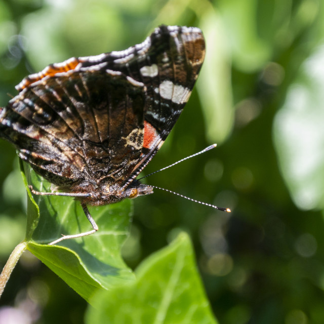 """""""Butterfly on a leaf"""" stock image"""