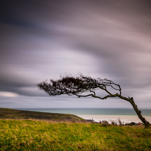 """Windswept tree on the South Downs"" stock image"