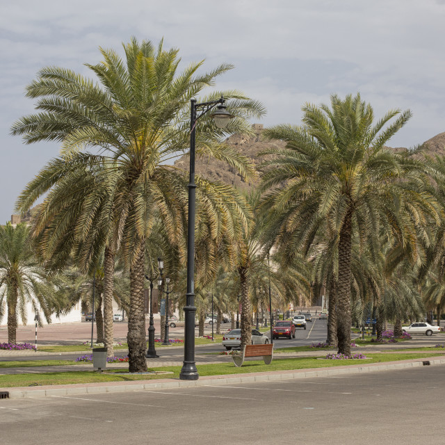 """Boulevard with cars and palms"" stock image"