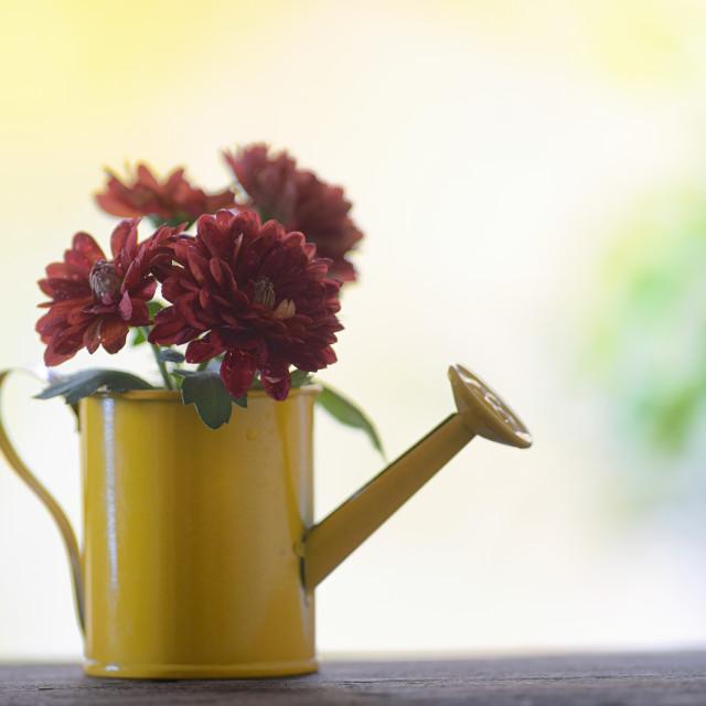 """Autmn Flowers in small bucket"" stock image"