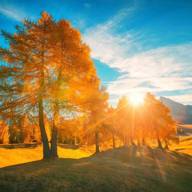 """""""Aerial autumn sunrise scenery with yellow trees"""" stock image"""