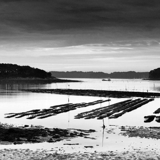 """""""Oyster farming"""" stock image"""