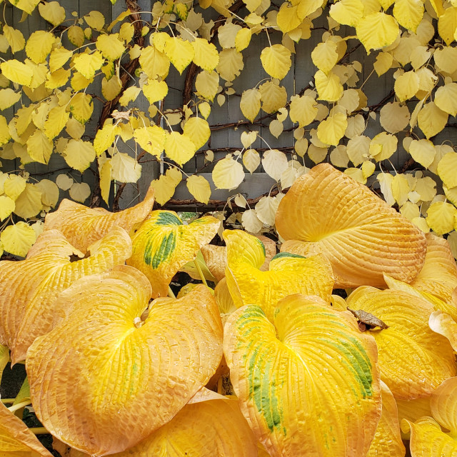 """""""Plants turning gold in the autumn"""" stock image"""